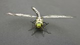 Libelle, Nahaufnahme - 219956013