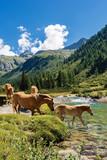 Horses in National Park of Adamello Brenta - Italy - 219961071
