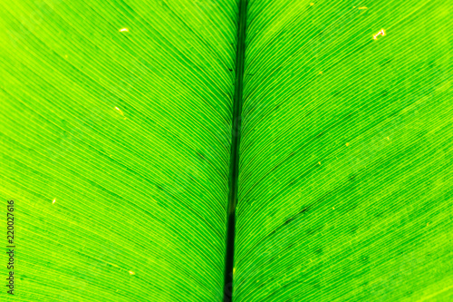 Leinwandbild Motiv Close up of palm leave in the Palm House at Kew Gardens in London,UK.Palm leaves background.