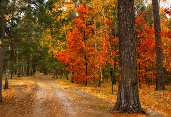 autumn sketches. landscape. autumn colors.