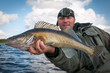 Leinwanddruck Bild - Nice size walleye fish in anglers hands