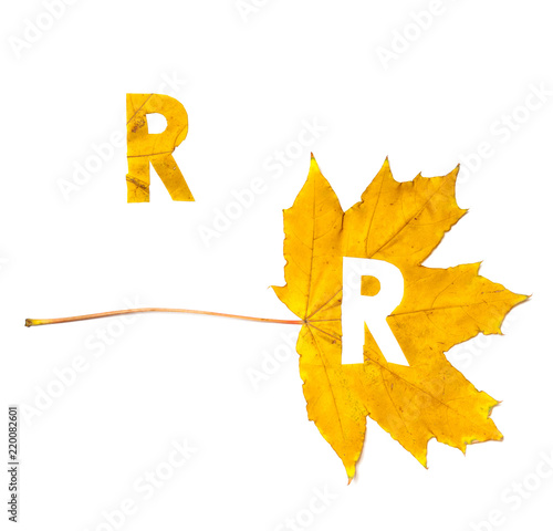 Foto Murales Autumn alphabet. Letter R is cut from  yellow maple leaf