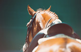 Beautiful horse portrait during dressage competition. Equestrian sport background. - 220095632