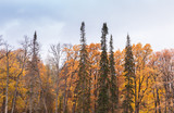 Autumn forest background photo - 220099257