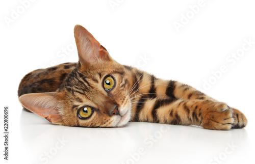 Fototapeta Bengal kitten resting