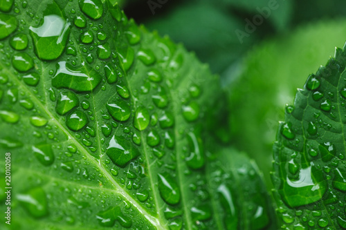 selective focus of green leaves with water drops - 220102058