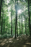 beautiful green forest with sunlight in Hamburg, Germany - 220102807
