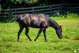 Ranch Horse Farm - 220114052