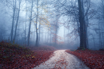 Magic foggy light in colorful autumn forest with road. © robsonphoto