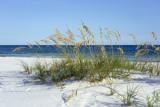 Ripe Sea Oats grace Pensacola, Florida's dazzling white beaches on the Gulf of Mexico each summer. - 220151028