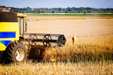 Picture of combine harvester machine harvesting crops - 220190092