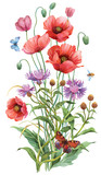 Wild flowers. Persian cornflower and  poppy isolated on white