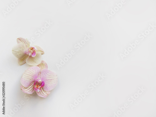 Fototapeta Flat lay composition with orchid flowers