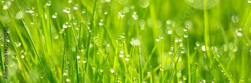 Frisches Gras mit Tautropfen und Bokeh - 220198280