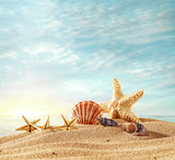 shells on beach and summer time  - 220217664