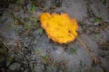 yellow autum leaf on soil background - 220232010