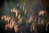 golden dry grass on meadow - 220232066