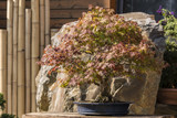 Bonsai exhibition outside on a sunny day.