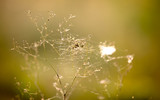dry grass and web - 220236624