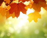 leaves in autumn forest - 220237210