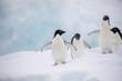 Leinwanddruck Bild - penguin in the arctic