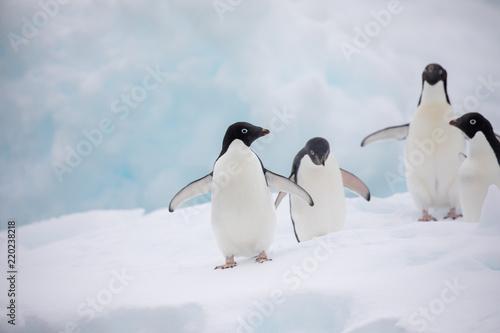 Leinwanddruck Bild penguin in the arctic