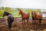 horses in the rain - 220242224
