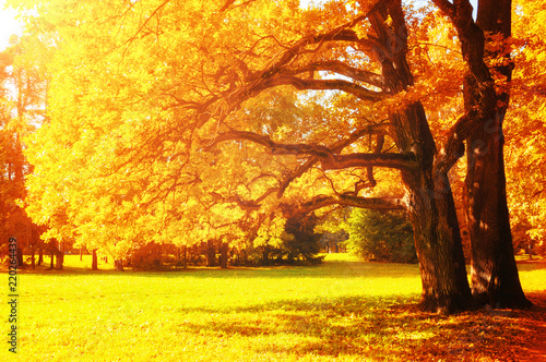 Fall picturesque landscape. Fall trees with yellowed foliage in sunny October park lit by sunshine