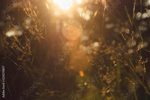 Nature meadow sunlight. - 220278857