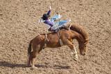 Rodeo cowboy - 220284237