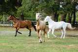 A mare, a gelding, and a pony - 220287210