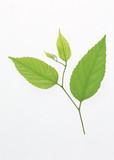 leaf isolate background - 220305045