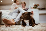 Happy couple with a pet dog at home - 220313622