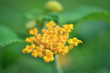 close capture of yellow flowers - 220315807