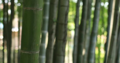 Bamboo forest at Japanese park in Tokyo © footagemaker2018