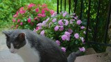 Cat on porch steps watching the rain. - 220367018