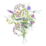Watercolor summer wildflowers. Botanical colorful illustration - 220379483
