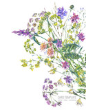 Watercolor summer wildflowers. Botanical colorful illustration - 220379670