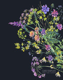 Watercolor summer wildflowers Botanical colorful illustration - 220379877