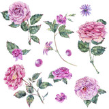 Set of vintage watercolor roses leaves, buds branches, flowers - 220381694