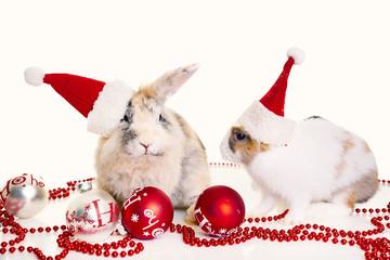 christmas pet © drubig-photo