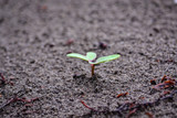 a small plant planted in the sand - 220423655