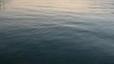 Calm ocean at sunset - 220449646