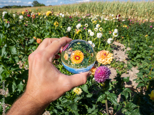 reflection of flower environment in a glas crystal ball