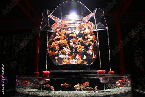 金魚の入った水槽