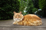 Close up of a cat lying on a patio decking - 220520836
