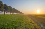 Countryside road through foggy farmland at sunrise in summer - 220560444
