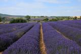 Lavendelfeld in der Provence - 220583846