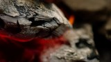 Campfire Log Texture Close Up in Slow Motion - 220607254