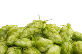 hop cones isolated - 220612253
